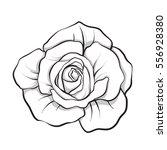 rose flower isolated outline... | Shutterstock .eps vector #556928380