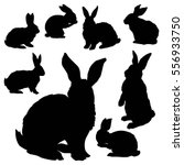 rabbit illustration  | Shutterstock .eps vector #556933750