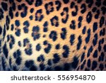 Real Jaguar Skin   Retro...