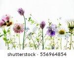 summer flowers | Shutterstock . vector #556964854