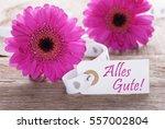 pink spring gerbera  label ... | Shutterstock . vector #557002804