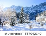 Winter Mountain Trees On Winte...