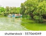 Visiting Sicao Mangrove Green...
