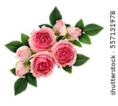 Stock photo pink rose flowers arrangement isolated on white 557131978