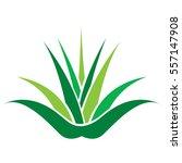 aloe vera plant green icon ...   Shutterstock .eps vector #557147908