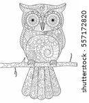 owl on a branch coloring book... | Shutterstock . vector #557172820