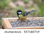 Great Tit On A Bird Table...