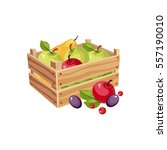 wodden crate full of garden...   Shutterstock .eps vector #557190010