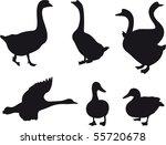 birds vector | Shutterstock .eps vector #55720678