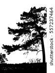 realistic pine tree silhouette  ... | Shutterstock .eps vector #557237464