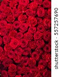 Stock photo red roses and carnations 557257690