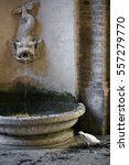 White Dove At A Fountain For...