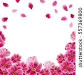 sakura flowers and falling... | Shutterstock .eps vector #557369800