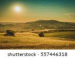 summer landscape of tuscany ... | Shutterstock . vector #557446318