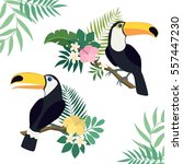 toucan birds with palm leaves ... | Shutterstock .eps vector #557447230
