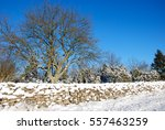 Sunny Winter Landscape With A...