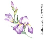 The Composition Of Irises. Han...