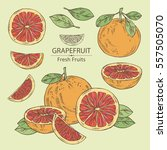 collection of grapefruit and... | Shutterstock .eps vector #557505070