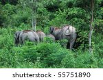 Wilds Elephant at Khao yai National Park Thailand. - stock photo