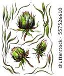 Green Thistle Scottish Plant...