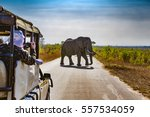 south africa. safari in kruger... | Shutterstock . vector #557534059