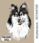 collie. drawing by hand in... | Shutterstock .eps vector #557559709