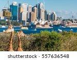 sydney  australia   july 23 ... | Shutterstock . vector #557636548