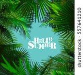 background palm leaves. vector. | Shutterstock .eps vector #557641210