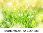green grass in drops of dew in... | Shutterstock . vector #557654383