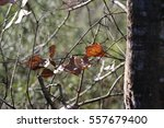autumn leaves | Shutterstock . vector #557679400