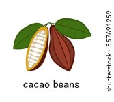 cocoa bean with leaf | Shutterstock .eps vector #557691259