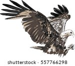 eagle isolated on a white...