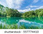 japanese landscape   goshiki... | Shutterstock . vector #557774410