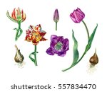 watercolor hand painted set of... | Shutterstock . vector #557834470