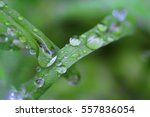 Small Drops Of Rain On A Blade...