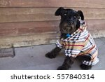Dog With Sweater On The Street