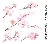 watercolor with spring tree in... | Shutterstock . vector #557871649