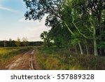 a dirt path with gravel... | Shutterstock . vector #557889328
