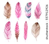 set of isolated exotic... | Shutterstock . vector #557912926