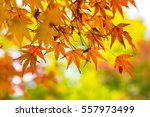 The Beautiful Autumn Color Of...