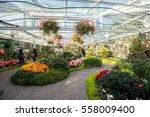 chiangmai   thailand   jan 2... | Shutterstock . vector #558009400