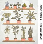 house plants on the shelves... | Shutterstock .eps vector #558013009