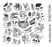 set of hand drawn vector spices ... | Shutterstock .eps vector #558075544