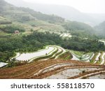 rice field terraces  rice paddy  | Shutterstock . vector #558118570