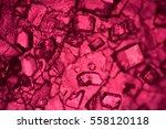 the microscopic world. fruit...   Shutterstock . vector #558120118