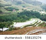 rice field terraces  rice paddy  | Shutterstock . vector #558135274