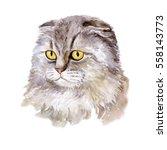 Watercolor Close Up Portrait O...