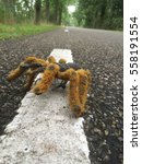 Small photo of Geocaching, cache in fake spider