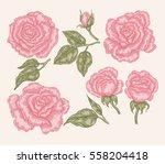 elegant pink rose flowers and... | Shutterstock .eps vector #558204418