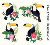 Vector Set Of Toucan Birds On...